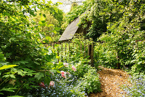 Mulched garden path leading through garden in early summer