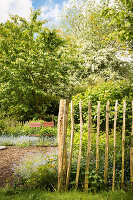 Chestnut paling fence and folding chairs next to vegetable patch in garden in early summer