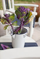 Purple ornamental cabbage in jug