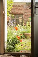 View through open door into summery courtyard garden