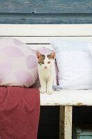 Katze zwischen Kissen mit selbst genähten Kissenbezügen auf Bank