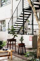 Bonsaibäume auf Hockern und Bänken in einem Innenhof