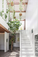 Weißes Treppenhaus mit Topfpflanzen und Bäumchen