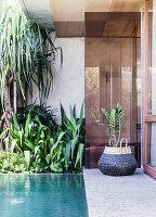 Terrasse mit Pool, umgeben von Grünpflanzen