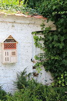 Insect hotel on ivy-covered garden wall