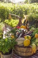 Korb mit geerntetem Gemüse und Obst im Garten