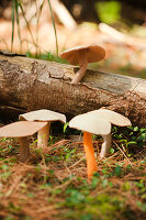 Group of hand-crafted mushrooms on sunny woodland floor
