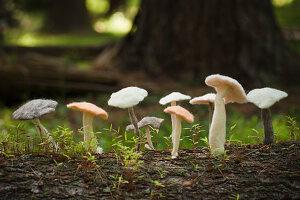 Group of felted mushrooms on tree trunk
