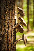 Mushrooms made from brown paper on tree trunk in woods