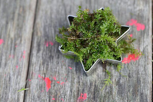 Fresh moss in star-shaped pastry cutter