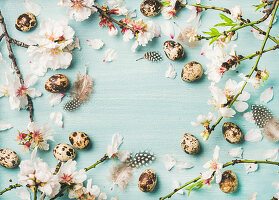 Branches of almond blossom, quail eggs and feathers framing light blue background