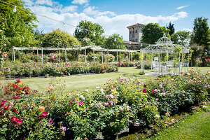 Roses and romantic pavilion in gardens
