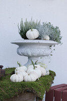 Autumnal arrangement with white pumpkins and moss