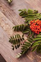 Sprig of rowan berries on wooden surface