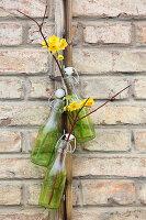 Narzissen und Zweige in hängenden Flaschen