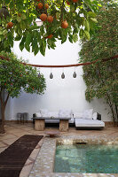 Orange tree and pool in courtyard of Hotel (Ryad Dyor, Marrakesh, Morocco)