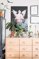 Houseplants in terracotta pots on chest of drawers
