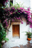 Bougainvillea growing over front door of Mediterranean house
