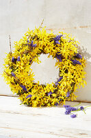Spring wreath of forsythia and hyacinth florets