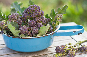 Freshly Picked, Purple Sprouts Broccoli In A Colander
