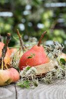 Gartentisch mit roten Williamsbirnen, kleinen Äpfeln und Namensschild
