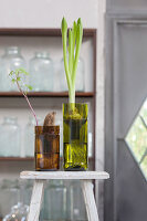 Narcissus and sweet potato seedling in two planters made from wine bottles