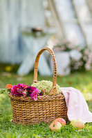 Basket of dahlias, hydrangeas and apples on lawn