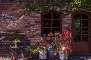 Autumn Arrangement With Big Zinc Buckets, Wild Wine And Pumpkin At The House Entrance