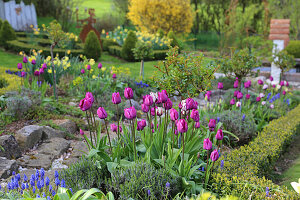 Spring bed with tulips