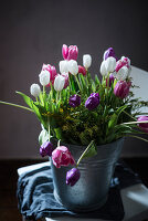 Fresh tulips in metal bucket on wooden chair