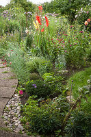 Gladioli and herbaceous perennials in summer bed