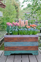 Spring flowers in raised bed made from reclaimed wood