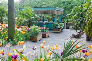Raised beds made from reclaimed wood in tulip garden
