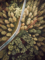 Straße durch den Wald aus der Vogelperspektive