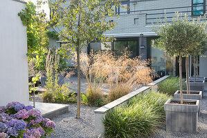 Blick auf Terrasse, Hortensien an der Mauer und Olivenbäumchen in Pflanzkübeln