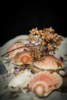 Scallop shells and dried flowers
