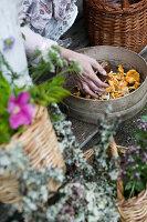Hand legt Pilze zum Trocknen in ein Sieb auf herbstlicher Terrasse