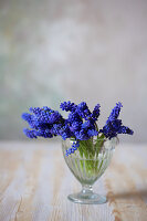 Grape hyacinths in glass
