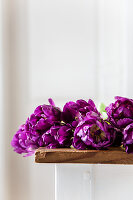 'Purple peony' tulips on table