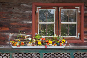 Zierkürbisse als Vase mit Herbstblumen geschmückt