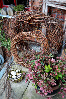 Wicker wreaths, hellebore and Easter nest