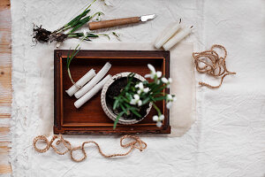 Potted snowdrops and candles on wooden tray