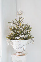 Small Christmas tree in patinated urn