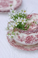 Chickweed in sugar bowl with red floral pattern