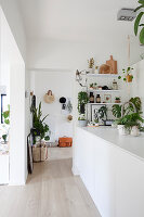 Many houseplants and vintage accessories in bright, white, open-plan kitchen