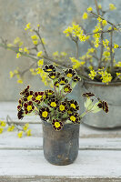 Primula 'Victoriana Gold Lace' and cornelian cherry blossom in old silver beaker and tin pot