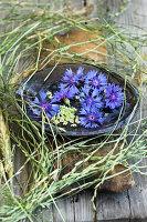 Schale mit Blüten der Kornblume