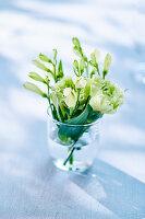 Weisse Nelken im Wasserglas