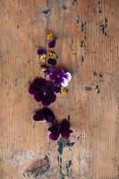 Veilchenblüten auf rustikalem Holzuntergrund