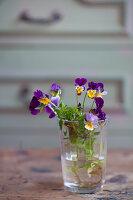 Veilchen in einem Glas